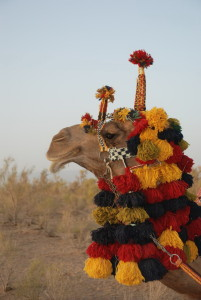 matinAbad desert camp - camel