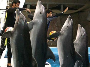 Dolphin Park in Kish Island Tour