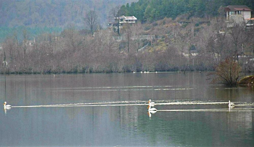 Guilan Austara