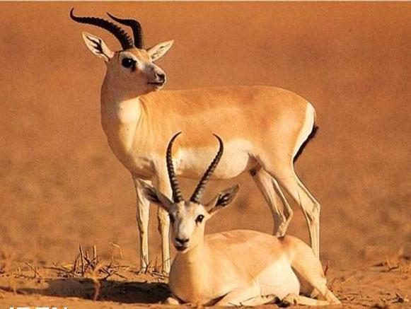 Iran Wild Life Ecosystem