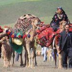 Firuzabad Qashqai Nomad