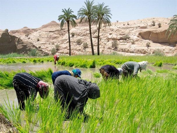 Izmaghan village , Paddy fields, Desert Village , Iran Destination