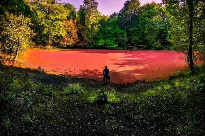Hasal swamp