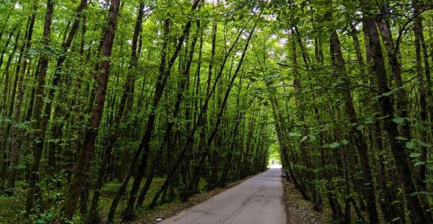Gissom Forest Park
