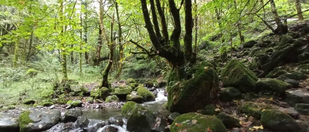savaran forest