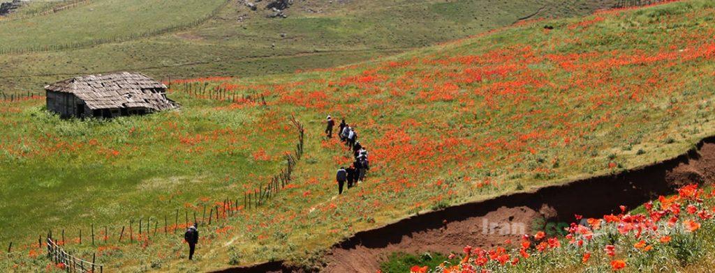 Reiseversicherung für Iran - Iran Destination