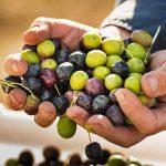 Iran Olive , Rudbar