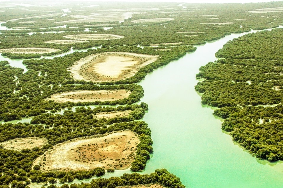 Mangrove Forest in Qeshm Island in Iran