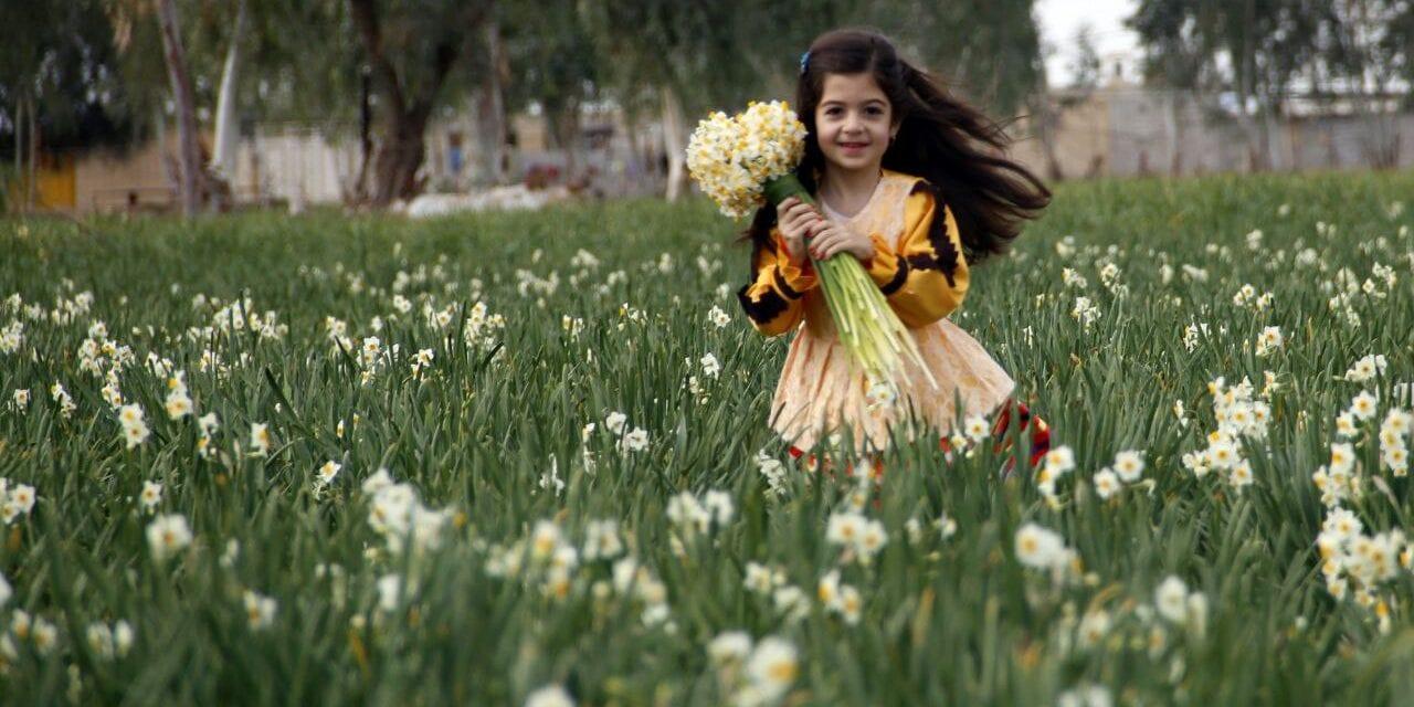 Narcessus in Kazeroon city - winter in Iran
