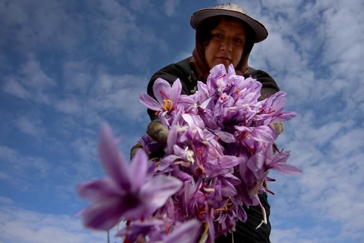 Persian Saffron - Iranian festivals